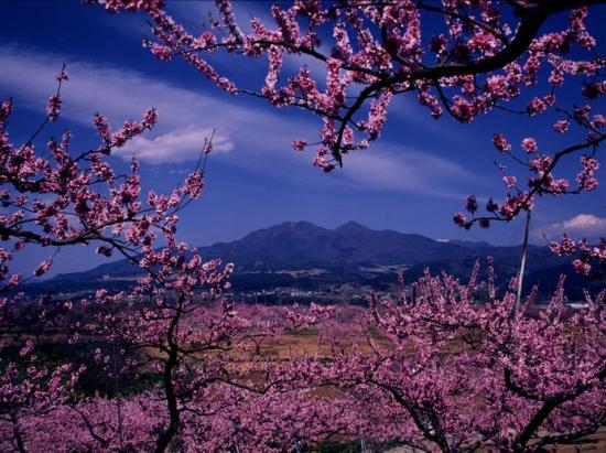 新府の春 富士山や八ヶ岳、南アルプスといった山々に代表される豊かな自然環境は、私た... 山梨県